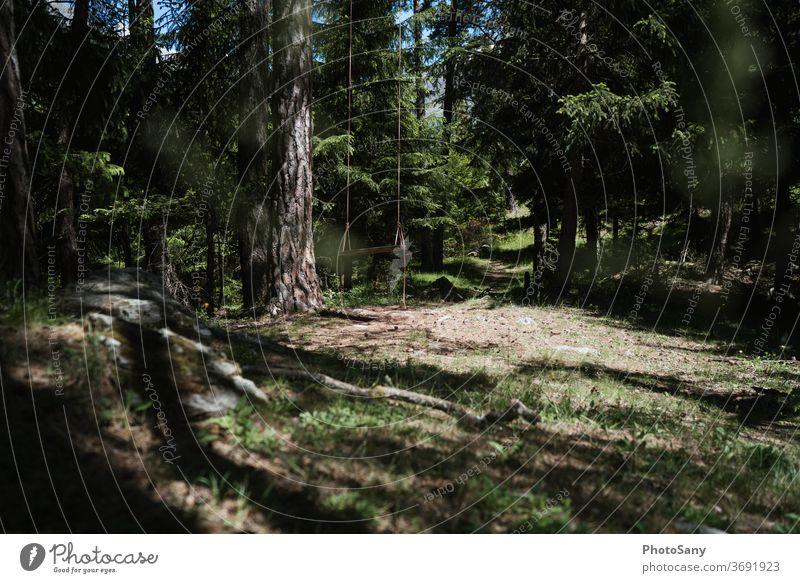 Schaukeln im Wald pendeln Waldlichtung Waldspielplatz grün Tannenwald Schweiz Wallis Waldboden braun