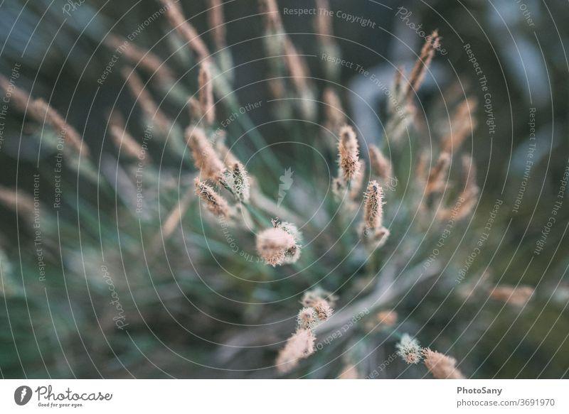Grünpflanze von oben tiefenschärfe strauch natur menschenleer garten Tiefenschärfe Wildpflanze Waldwiese Vogelperspektive Außenaufnahme Farbfoto grün Natur