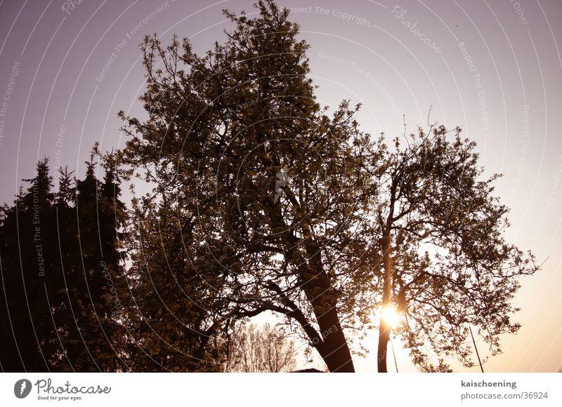 brinentree Himmel blau Baum Sonne Garten Anlegestelle