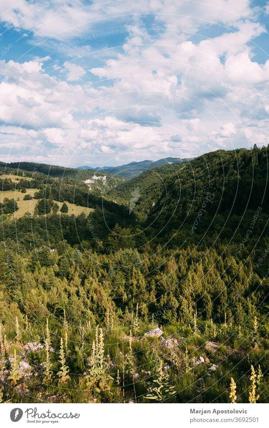 Blick auf eine wunderschöne Landschaft des Zlatibor-Gebirges in Serbien Abenteuer Hintergrund Schönheit blau Wolken wolkig Ökologie Umwelt Europa Immergrün