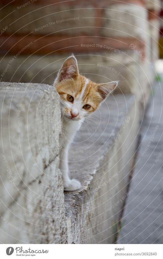 Aus der Deckung wagen | Kätzchen blickt neugierig hinter einer Steinmauer hervor. Katze scheu vorsichtig Schüchtern Schüchternheit Schutz niedlich fluffig jung