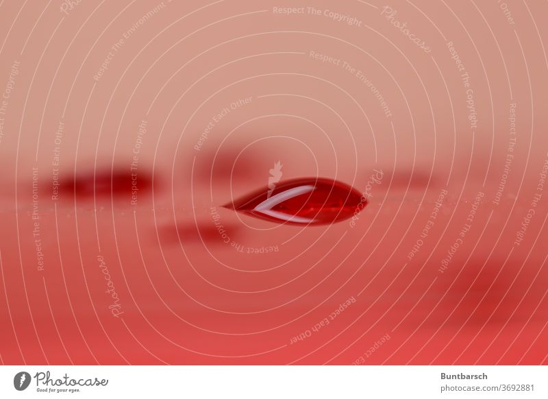 roter Tropfen Regentropfen Blutstropfen Rotwein Natur nass Wasser Wassertropfen Nahaufnahme Makroaufnahme Detailaufnahme Farbfoto Tau feucht Licht