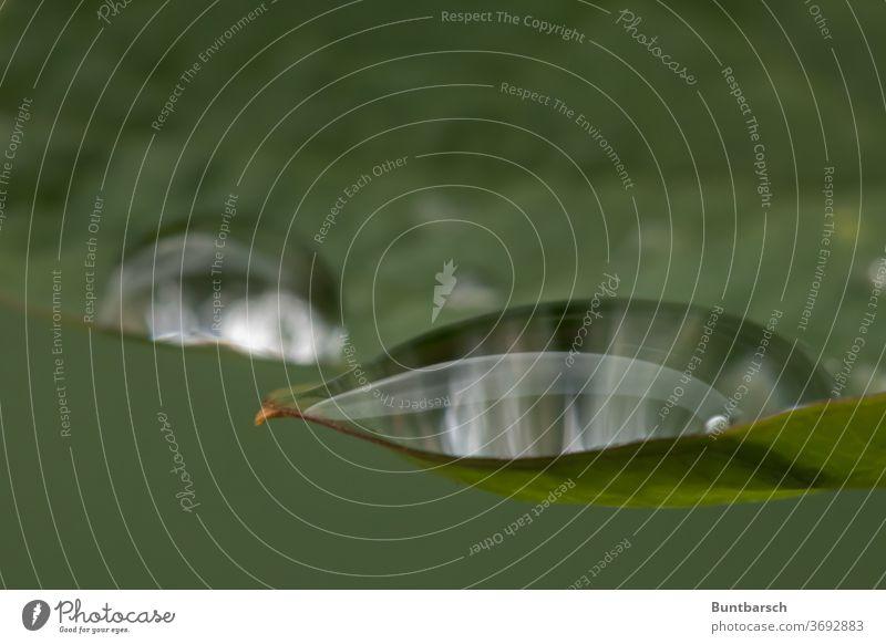 Wassertropfen auf Blatt als Makro wasser... Regen grün Pflanze Makroaufnahme Nahaufnahme nass Natur feucht Reflexion & Spiegelung Tropfen Detailaufnahme Tau