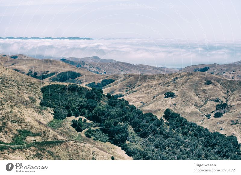 Westküste Nebel Nebelschleier Nebelstimmung Nebelbank Nebelmeer Nebelwand Nebelwald Nebeldecke Nebelfeld Aussicht Amerika USA Berge u. Gebirge
