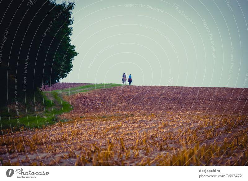 Auf dem Rücken der Pferde...., Zwei Reiter in der Ferne auf abgeerntenem Feld . Im Hintergrund blauer Himmel. Links von Ihnen ein Waldstück. pferde gehen Sommer