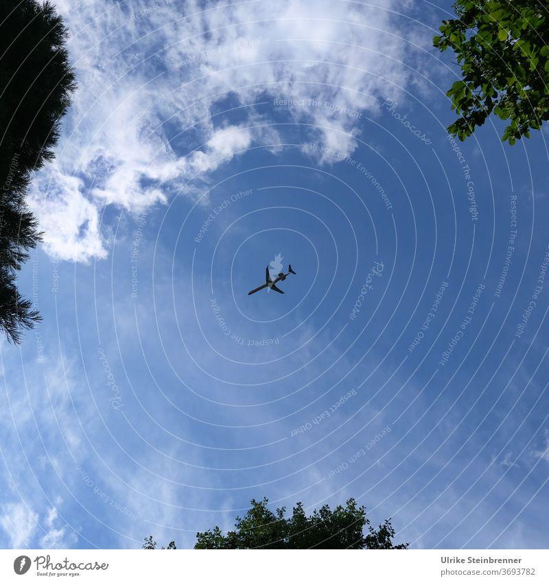 Flugzeug im Landeanflug Flieger Ferienflieger Himmel Bäume Wolken Blau Luftfahrzeug Luftverkehr fliegen Anflug Einflugschneise Verkehrsmittel Flugreise reisen