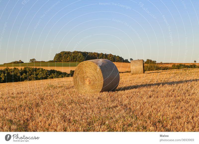 Heuballen auf einem landwirtschaftlichen Feld. Ländliche Natur auf dem Bauernhof Ackerbau Ernte ländlich Ballen Landschaft Stroh Himmel Sommer golden Weizen
