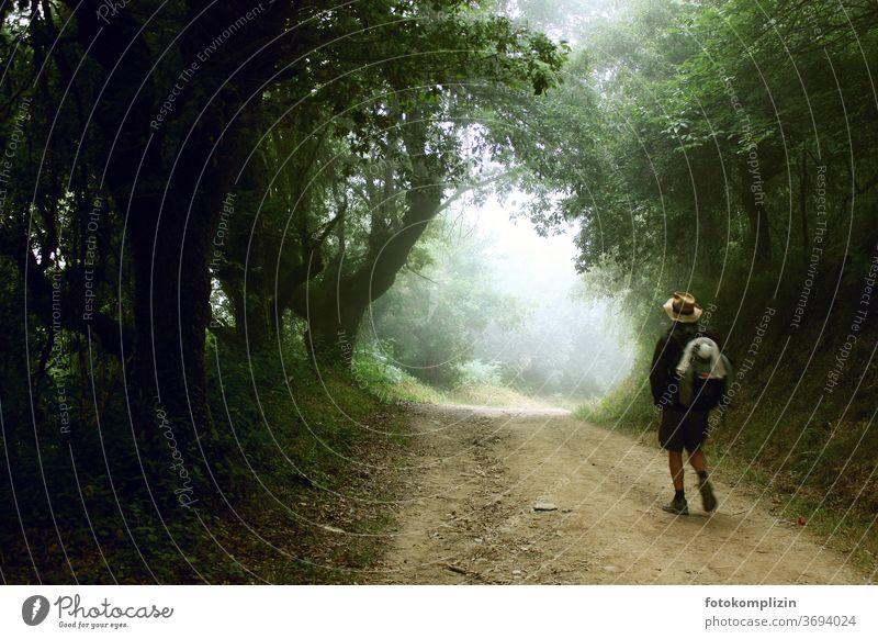 Wandersmann mit Hut auf einem schattigem Weg der ins Helle führt wandern wandersmann Wandern Wege & Pfade Zukunft gehen Fußweg Spaziergang Wald Bäume ruhig