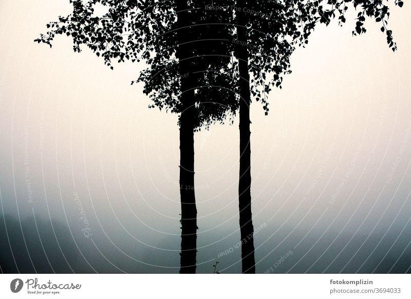zwei parallele nebeneinander wachsende Baumstämme mit Blattwerk im Nebel Parallelen Bäume blattwerk Baumkrone Silhouette nebelig morgennebel Morgennebel ruhig