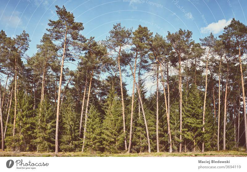Retro-getontes Bild eines Waldes an einem sonnigen Tag. Natur Baum retro Landschaft altehrwürdig gefiltert Himmel Holz wild Szene Umwelt