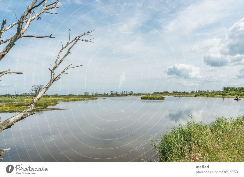 Sommertag im Naturschutzgebiet Geltinger Birk II Landschaft Wasser Schönes Wetter Außenaufnahme Menschenleer Himmel Gedeckte Farben ruhig Tag grün blau Erholung