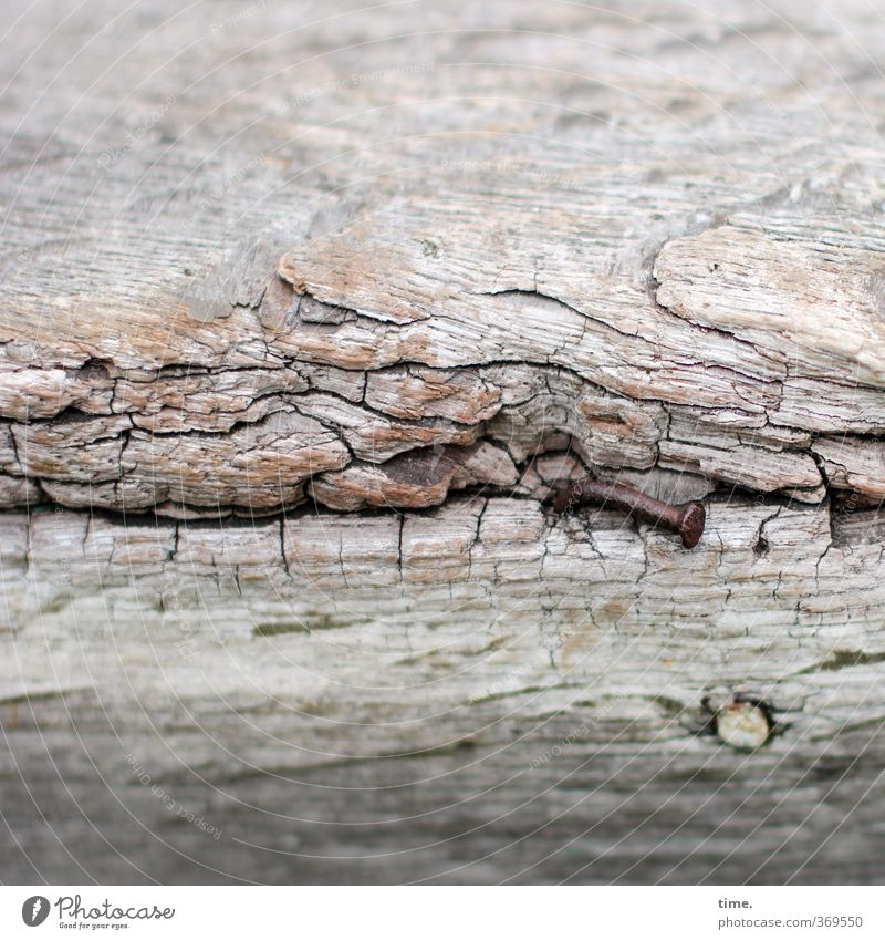 wetterfühlig Schiffswrack Schiffsplanken maritim Nagel Holz Metall alt historisch kaputt trashig entdecken geheimnisvoll einzigartig nackt Nostalgie Verfall