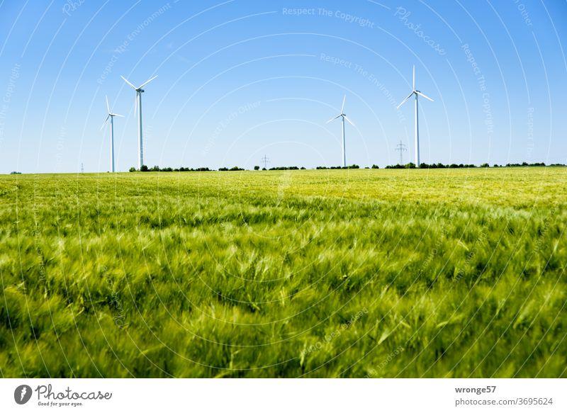 4 Windkraftanlagen hinter einem grünen Getreidefeld Windmühlen erneuerbare Energie grüne Energie Horizont blauer Himmel Wolkenloser Himmel Kornfeld Roggenfeld