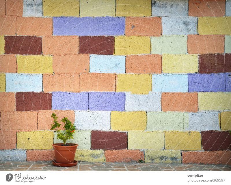 Bunte Wand mit Blumentopf Ferien & Urlaub & Reisen blau grün Pflanze rot Blume Haus gelb Leben Garten orange Wohnung Idylle Häusliches Leben malen Blumentopf