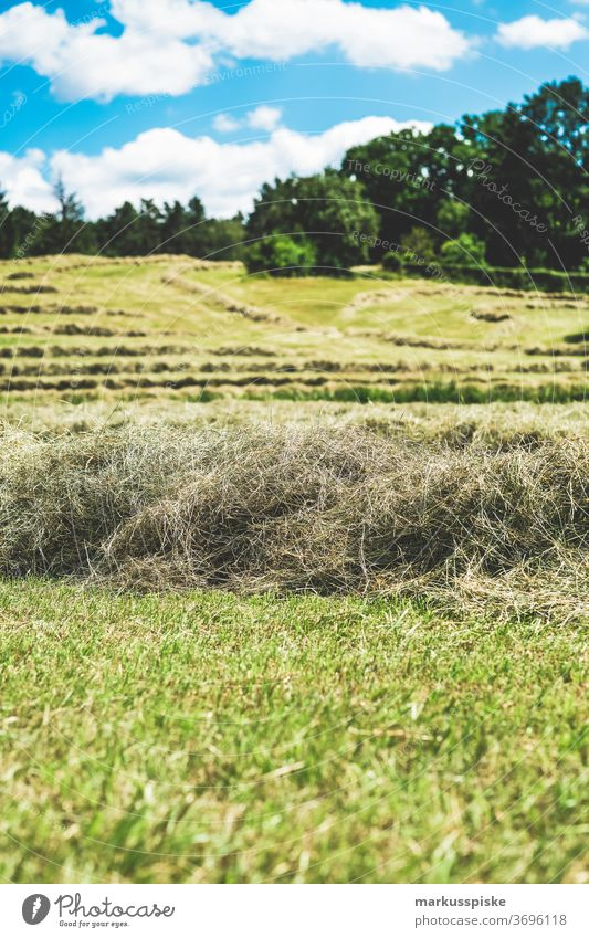Bio gentechnikfrei frisches Heu Blütezeit züchten Zucht Cash-Cropping kontrollierte Landwirtschaft Ernte Pflanzenbau Bodenbearbeitung Lebensmittel genetisch