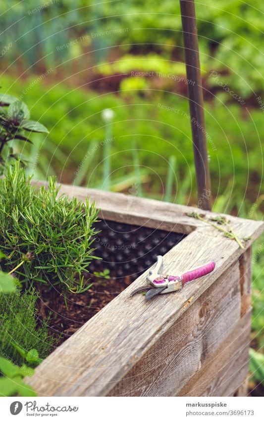 Frische Bio-Ernte Hausgartenkräuter Ackerbau Biographie Blütezeit züchten Zucht Kindheit Wintergarten kontrollierte Landwirtschaft Bodenbearbeitung Lebensmittel