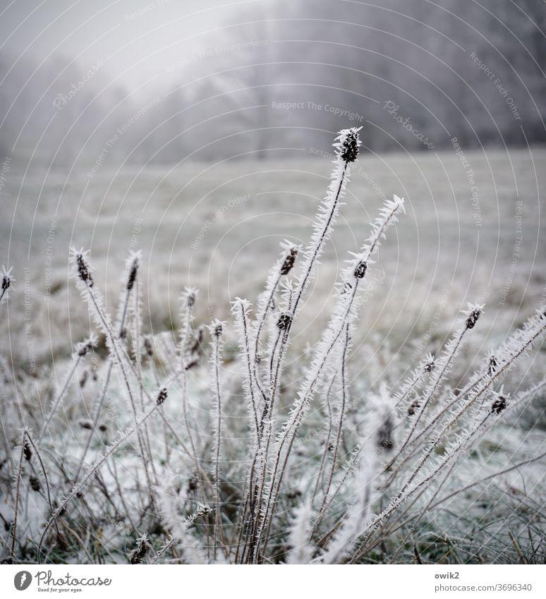 Kalte Halme bizarr Muster Eiskristalle frieren Nebel Himmel Tag Textfreiraum oben Sträucher Landschaft Schnee gefroren Strukturen & Formen Gedeckte Farben