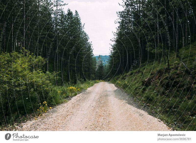 Blick auf den Feldweg, der durch den Bergwald führt Herbst Hintergrund schön wolkig Land Landschaft Tag Schmutz leer Umwelt Immergrün Laubwerk Wald Kies Grün