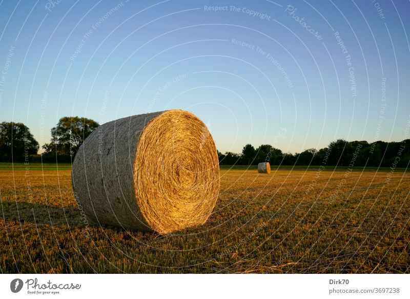 Heuballen Mahd mähen gemäht Gemähte Wiese Wolkenloser Himmel Abend Abendlicht Sonnenlicht Landschaft Gras Landwirtschaft Außenaufnahme Sommer Farbfoto Umwelt