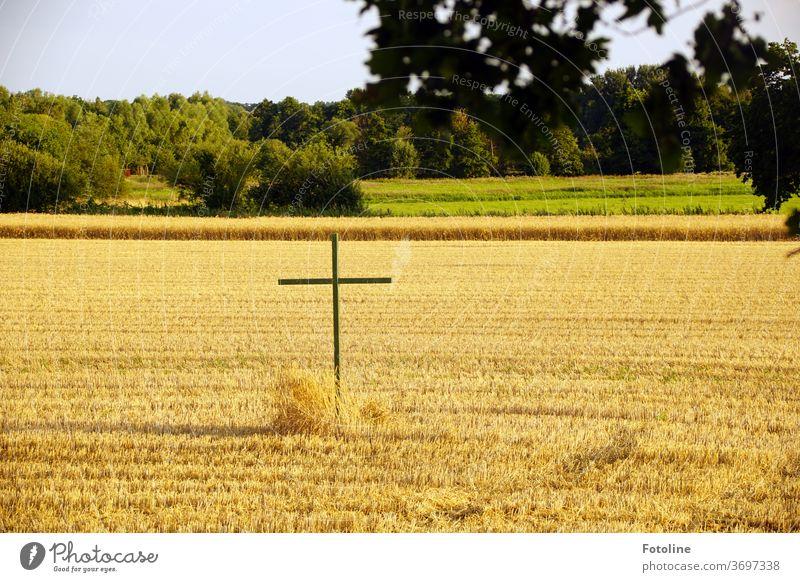 Auf einem abgemähten Kornfeld steh ein hölzernes Kreuz als Mahnung Feld Sommer Landwirtschaft Getreide Ähren Natur Getreidefeld Nutzpflanze Ackerbau Ernährung