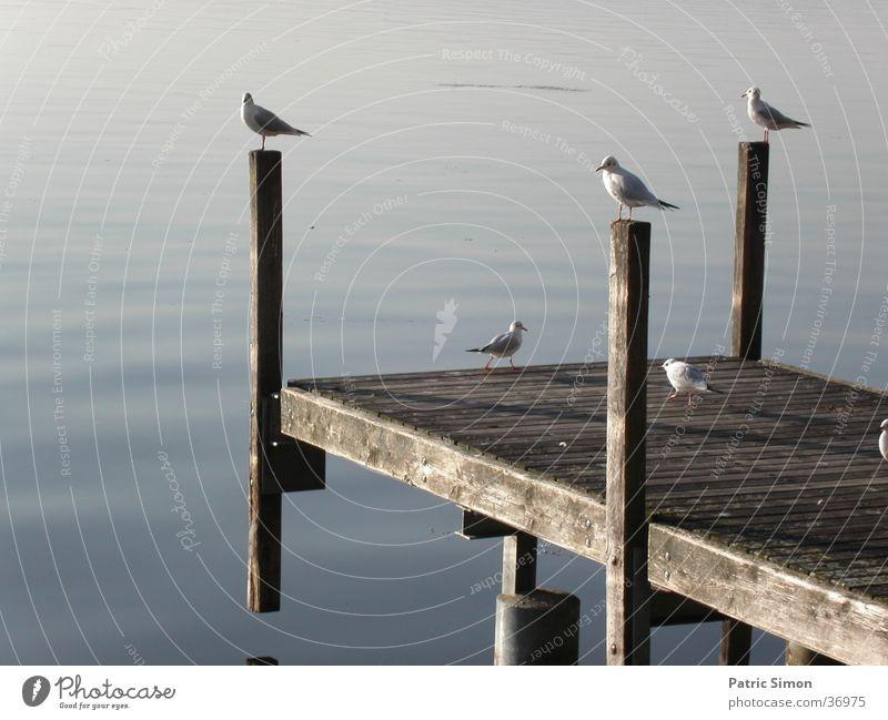 Möven am Steg Wasser Tier Stimmung Vogel Pfosten