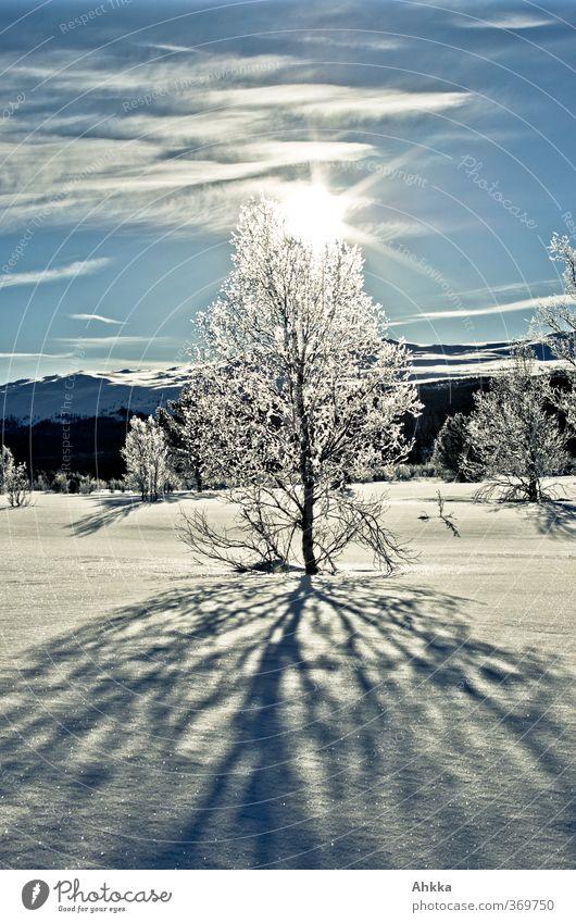 Verschneiter Baum in Gegenlicht, Winterlandschaft Norwegen Natur Ferien & Urlaub & Reisen blau Sonne Einsamkeit Landschaft Tier kalt Berge u. Gebirge Schnee