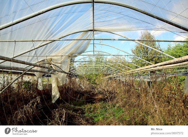 Architektur und Natur I luftig Pflanze Gewächshaus Verfall verfallen Dach Plane Folie Metall vertrocknet kaputt Vergänglichkeit Ruine Zerstörung Gartenarbeit