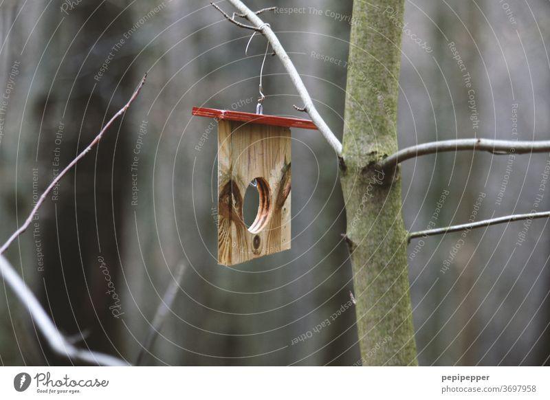Plattenbau, kleines Vogelhaus an einem Baum Farbfoto Natur Außenaufnahme Pflanze Umwelt Landschaft grün Wald Winter Haus Ast Loch Holz Menschenleer Tag braun