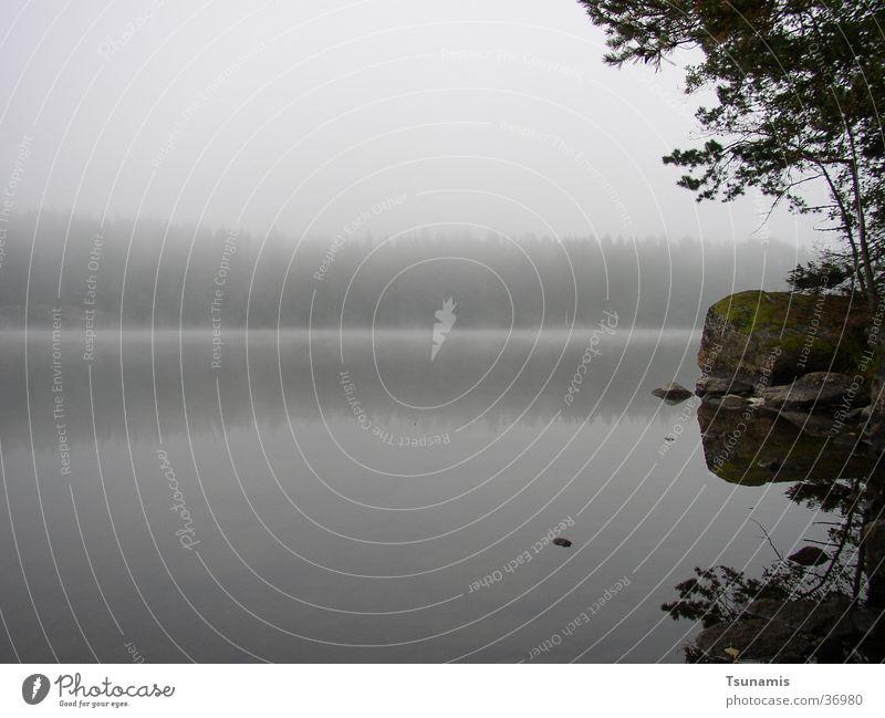 Morgen am See See Küste Nebel Schweden