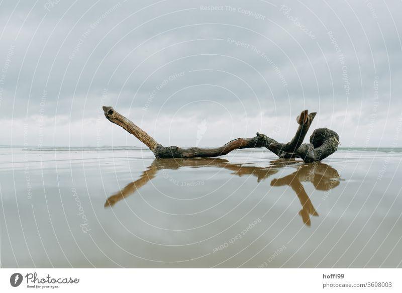 ein einsamer angespülter Ast am Strand Treibgut Stillleben Einsam herbstlich Meer Nordsee Küste Herbst herbsturlaub Besinnlichkeit besinnlich Wolken Sand Wasser