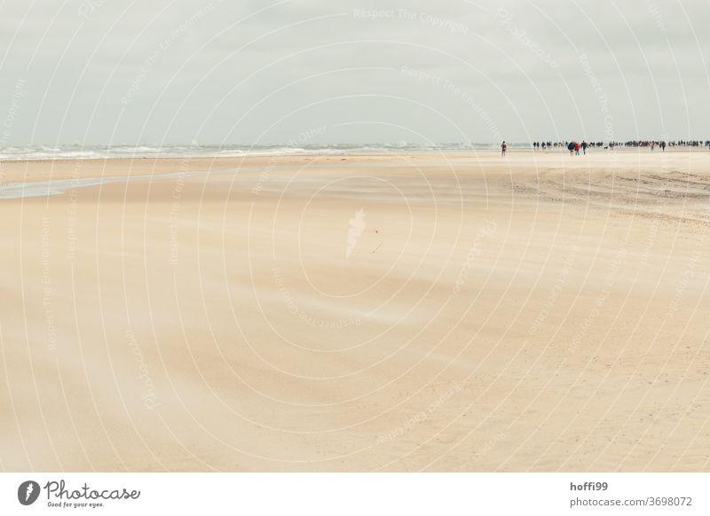 reges Treiben in der Ferne am weiten Strand von Skagen Meer Küste Sommer Landschaft nass Wasser Ferien & Urlaub & Reisen Erholung ebbe und flut Sonnenlicht