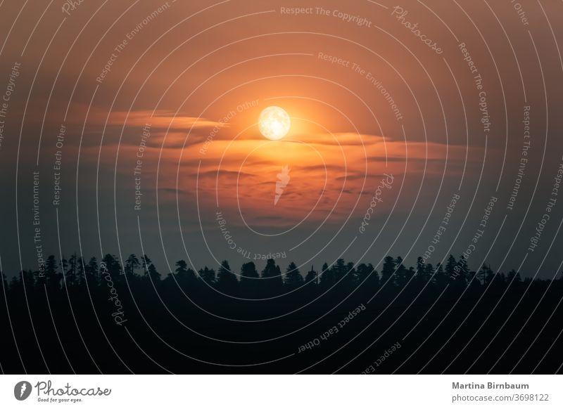 Dämmerungsstimmung mit Vollmond und Wolken über einem Wald Abend orange friedlich geheimnisvoll satt Mond Landschaft Kalifornien Umwelt im Freien Natur dunkel