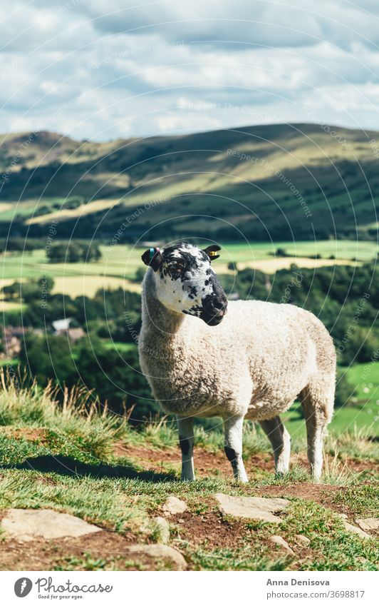 Aufenthalt in Edale während des Sommers Ansicht Großbritannien England Schaf Ziege Hügel staycation Heimaturlaub lokale Reisen Tal Landschaft malerisch Natur