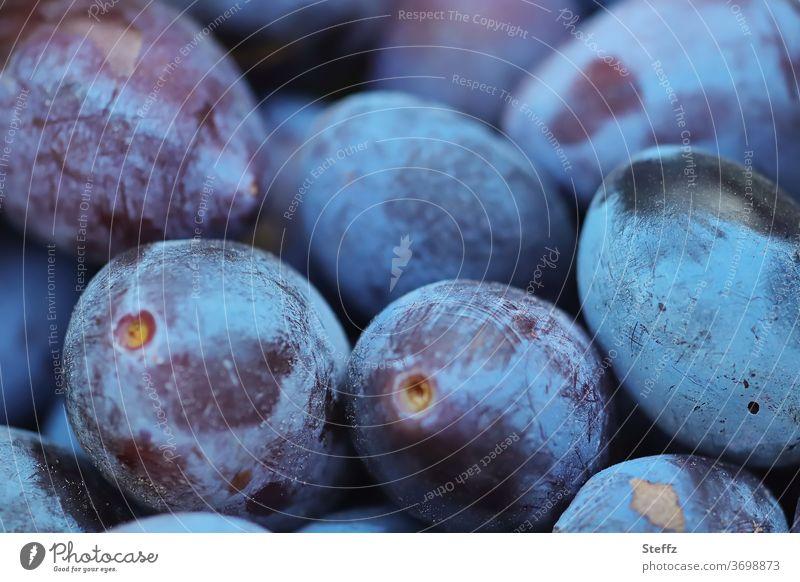 Fruchternte Pflaumen Zwetschgen Gartenobst Obst Früchte frisch saftig lecker süß fruchtig bio Bioprodukte organisch reif Ernährung Gesunde Ernährung