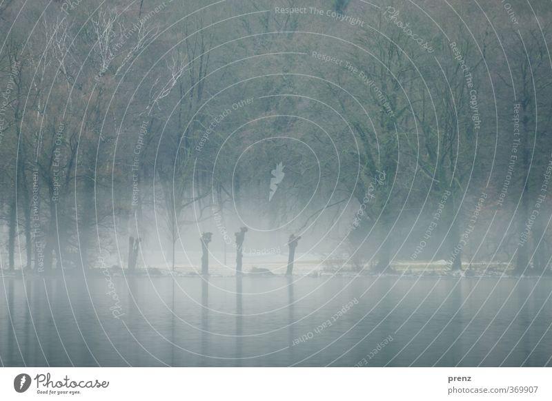 mystisch Natur blau Baum Winter Umwelt grau See Nebel Seeufer Dunst Nebelschleier