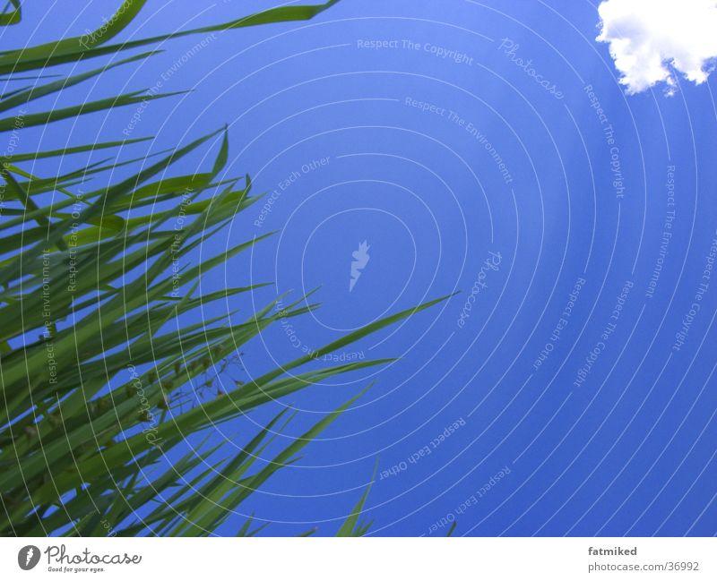 Gras&Wolken Himmel blau Wolken Gras
