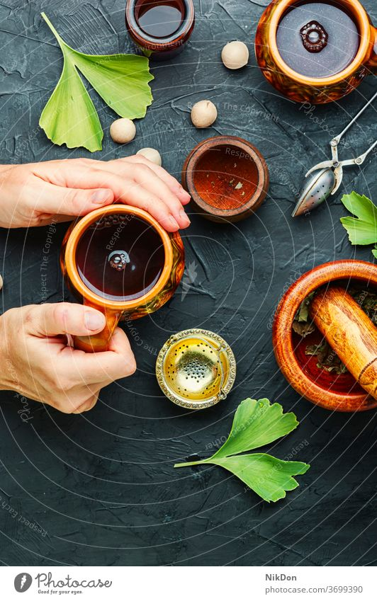 Ginkgo biloba in der Kräutermedizin Blatt medizinisch Blätter Pflanze Heilkraut Kraut Ginkgo-biloba-Blätter Ginkgo biloba-Samen Hände Hand Menschen Tee Tasse