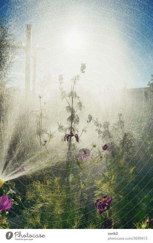 Schauerlich Außenaufnahme Pflanze nass Wasser Garten Wassertropfen gießen Tag Nahaufnahme Regen feucht Dusche hell Menschenleer Natur Sonnenlicht Sträucher