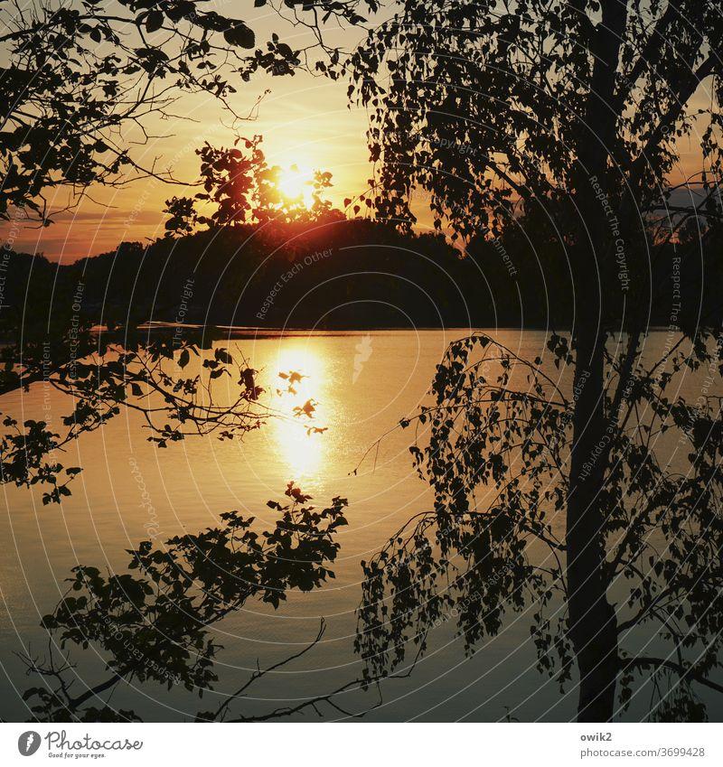 Sonne hinterm Gezweig Umwelt Sonnenuntergang Landschaft See Licht Baum Menschenleer Außenaufnahme Farbfoto Kontrast Natur Idylle Textfreiraum unten