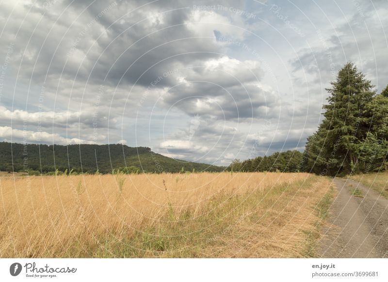Feldweg Weg Kiesweg Baum Hügel Pfalz Rheinland-Pfalz Spazierweg Landschaftsbilder Himmel Wolken Weitwinkel Horizont Idylle Menschenleer Natur Sonnenlicht Sommer