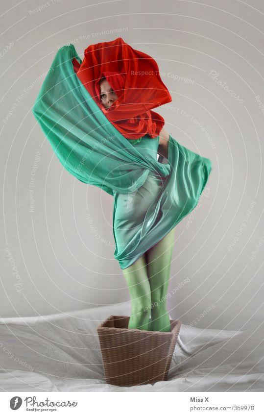 Mohnblüte Karneval Mensch feminin Frau Erwachsene 18-30 Jahre Jugendliche Pflanze Blume Blatt Blüte Topfpflanze Kleid Blühend grün rot Blumentopf Wachstum