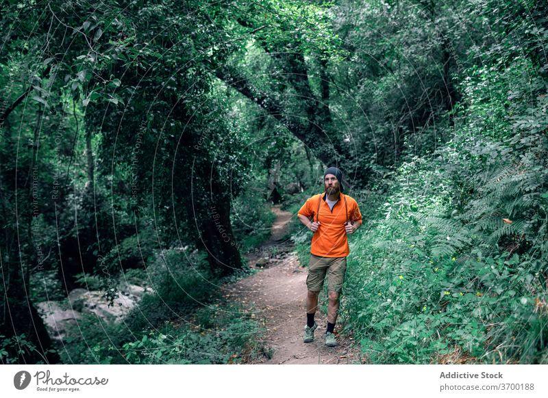 Männlicher Tourist, der im grünen Wald spazieren geht Wälder Sommer Urlaub Mann reisen Wanderer Nachlauf Feiertag Tourismus männlich Ausflug Baum Reisender