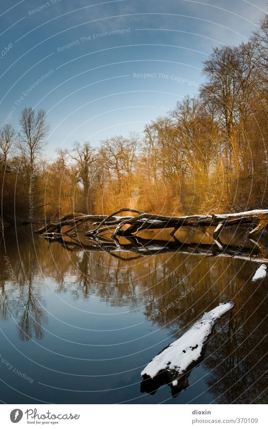 Das Ende des Winters Umwelt Natur Landschaft Wasser Himmel Schönes Wetter Schnee Baum Wald Flussufer Rhein Altrhein Flußauen Auwald Farbfoto Außenaufnahme