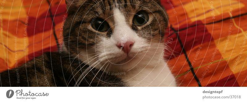 katzenblick Erholung Katze Bett