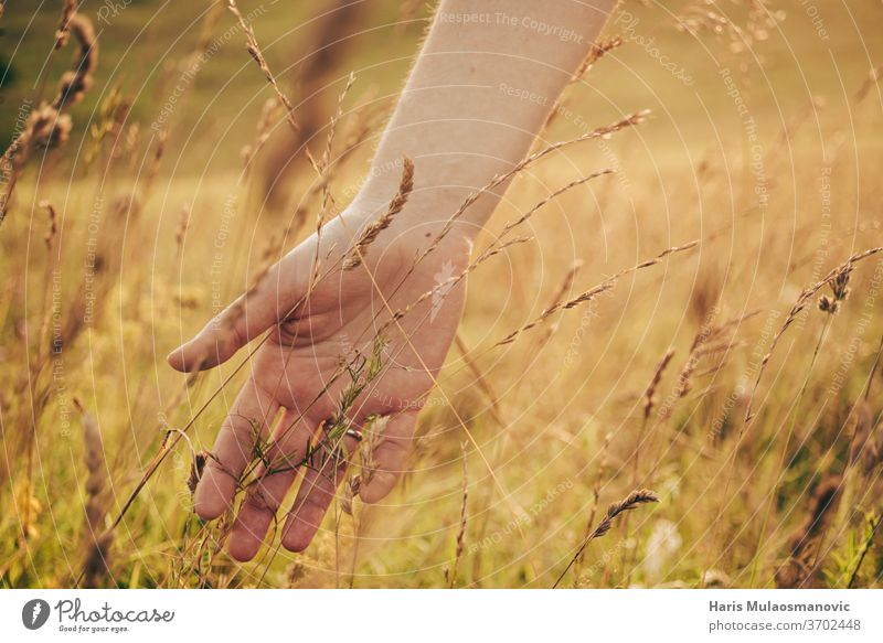Frau Hand im goldenen Gras Sommerfeld im Sonnenuntergang Nahaufnahme lässig Konzept Korona-Technik Corona-Virus bedeckt bedeckte Augen abgedeckte Fläche