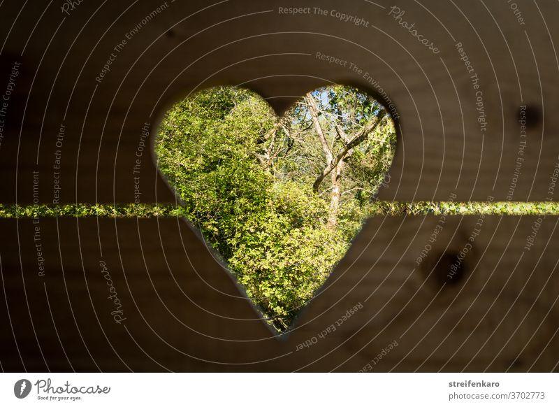 Erleichterter Blick ins Grüne durch die herzförmige Öffnung in der Tür des alten Plumpsklos Herz Toilette Holz Tag Hütte Farbfoto Menschenleer braun Natur