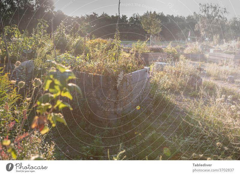 Beflanztes Hochbeet in Urban Gardening Projekt Beet Garten Park Kräuter gärtnern Kisten Pflanze Gemüse Busch Pflanzen Gras Zierpflanzen Außenaufnahme