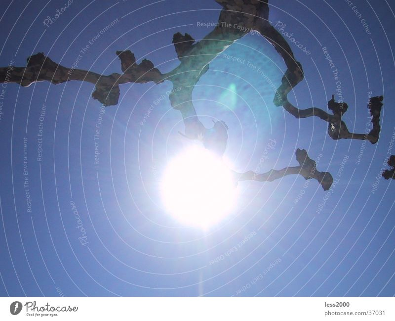 Sonnenspiegelung Natur Himmel blau Ast Blendenfleck