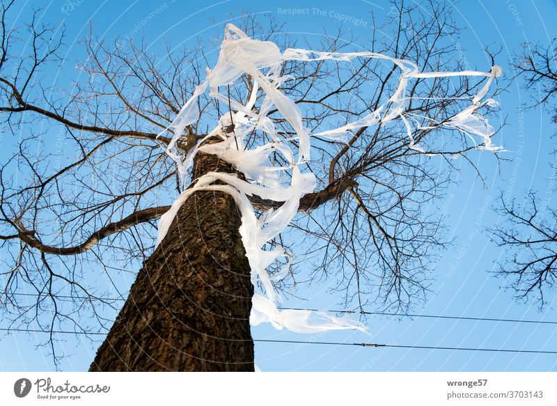 gefangen im Plastik müll Thementag Folie Baum Straßenbaum Häuserfront Straßenrand Stadt Stadtgrün Müll Plastikfolie Plastikmüll Umweltverschmutzung Kunststoff