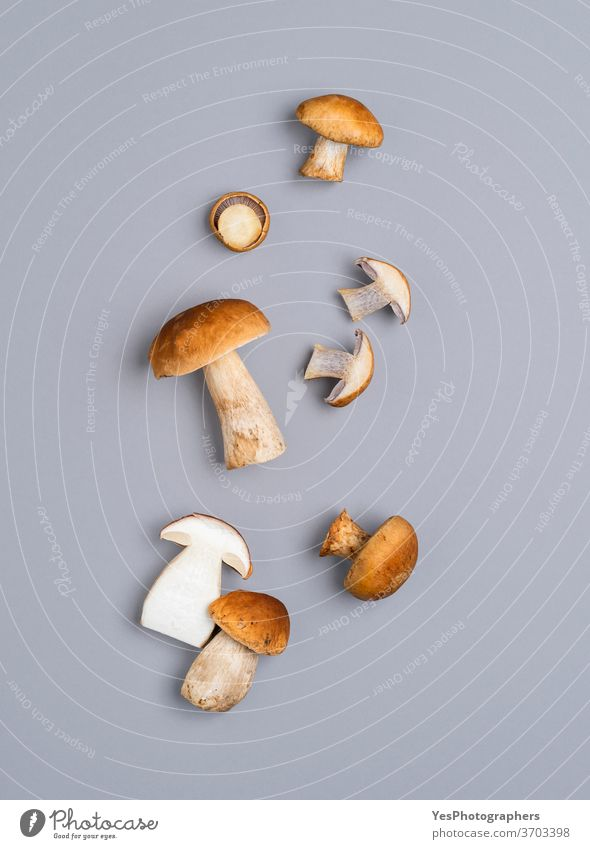 Die Pilze liegen flach auf einem grauen Tisch. Steinpilz isoliert auf einem farbigen Hintergrund obere Ansicht Herbst Steinpilze braun ausschneiden essbar